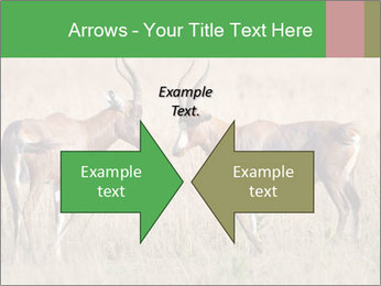 Pair of Blesbok PowerPoint Templates - Slide 90