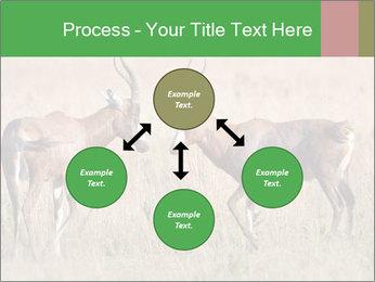 Pair of Blesbok PowerPoint Template - Slide 91