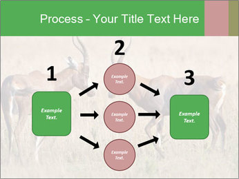 Pair of Blesbok PowerPoint Templates - Slide 92