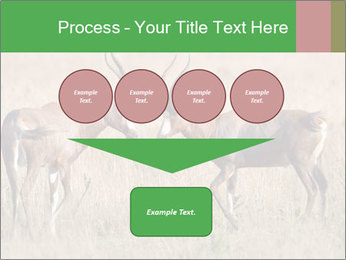 Pair of Blesbok PowerPoint Template - Slide 93