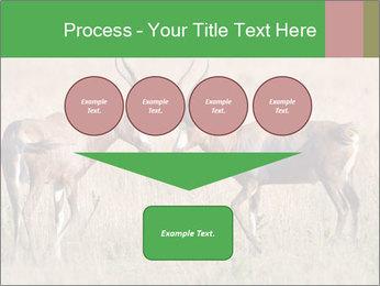 Pair of Blesbok PowerPoint Templates - Slide 93