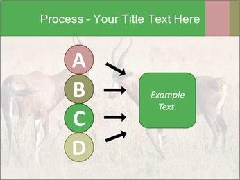 Pair of Blesbok PowerPoint Template - Slide 94