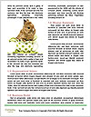 0000093263 Word Templates - Page 4