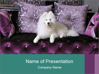 Samoyed dog PowerPoint Templates - Slide 1