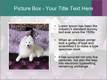 Samoyed dog PowerPoint Templates - Slide 13