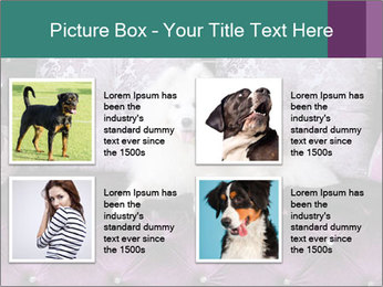Samoyed dog PowerPoint Templates - Slide 14