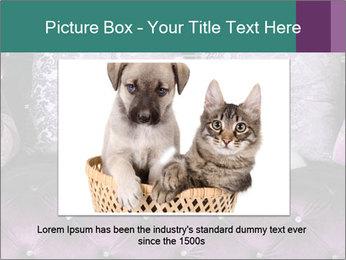 Samoyed dog PowerPoint Template - Slide 15