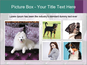 Samoyed dog PowerPoint Templates - Slide 19