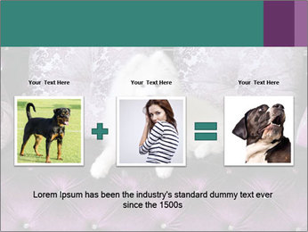 Samoyed dog PowerPoint Templates - Slide 22