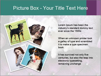 Samoyed dog PowerPoint Templates - Slide 23