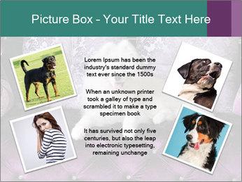 Samoyed dog PowerPoint Template - Slide 24