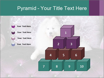 Samoyed dog PowerPoint Templates - Slide 31