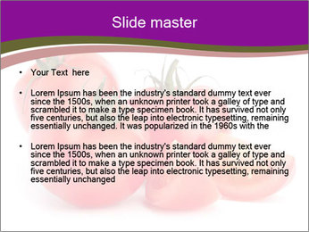 Tomato vegetables PowerPoint Template - Slide 2
