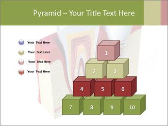 Anatomy of healthy teeth PowerPoint Template - Slide 31