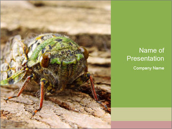 Green Cicada PowerPoint Template - Slide 1