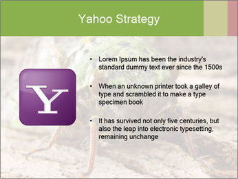 Green Cicada PowerPoint Template - Slide 11