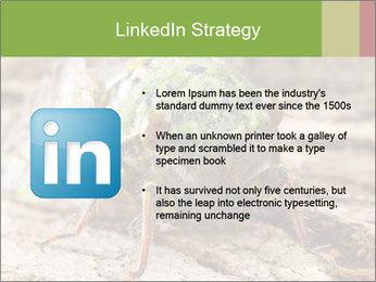 Green Cicada PowerPoint Template - Slide 12