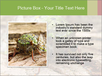 Green Cicada PowerPoint Template - Slide 13