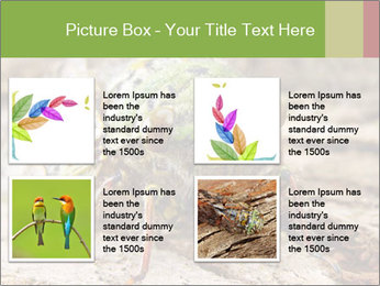 Green Cicada PowerPoint Template - Slide 14