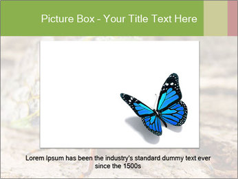 Green Cicada PowerPoint Template - Slide 16
