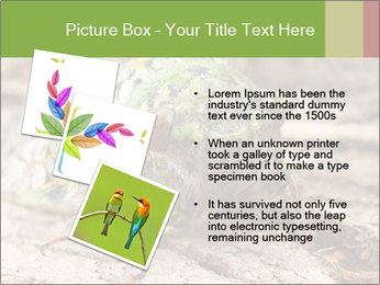 Green Cicada PowerPoint Template - Slide 17