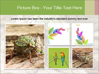 Green Cicada PowerPoint Template - Slide 19