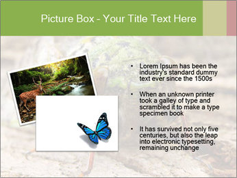 Green Cicada PowerPoint Template - Slide 20