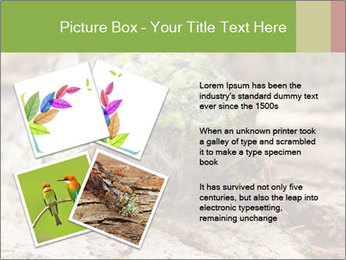 Green Cicada PowerPoint Template - Slide 23