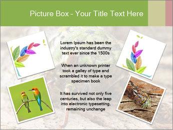 Green Cicada PowerPoint Template - Slide 24