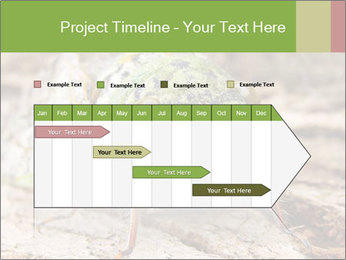 Green Cicada PowerPoint Template - Slide 25