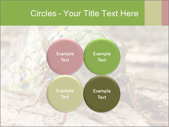 Green Cicada PowerPoint Template - Slide 38