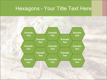 Green Cicada PowerPoint Template - Slide 44