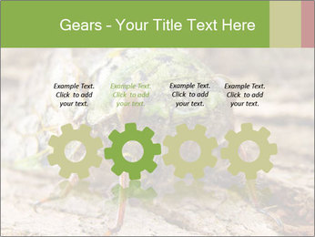 Green Cicada PowerPoint Template - Slide 48