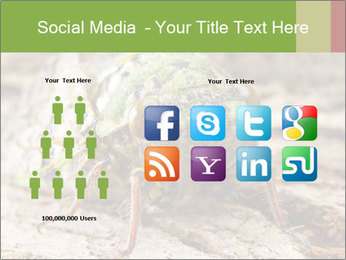Green Cicada PowerPoint Template - Slide 5