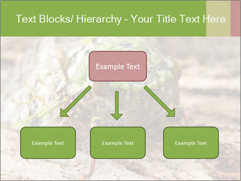 Green Cicada PowerPoint Template - Slide 69