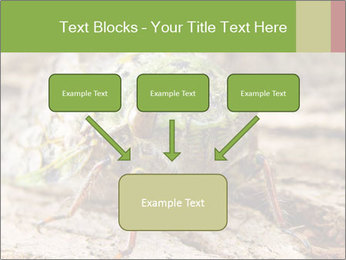 Green Cicada PowerPoint Template - Slide 70