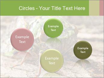 Green Cicada PowerPoint Template - Slide 77