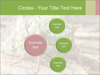 Green Cicada PowerPoint Template - Slide 79