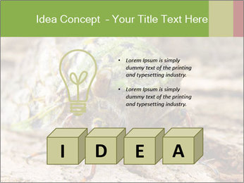 Green Cicada PowerPoint Template - Slide 80