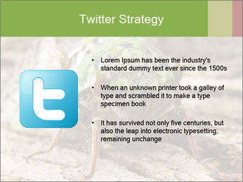 Green Cicada PowerPoint Template - Slide 9