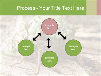 Green Cicada PowerPoint Template - Slide 91