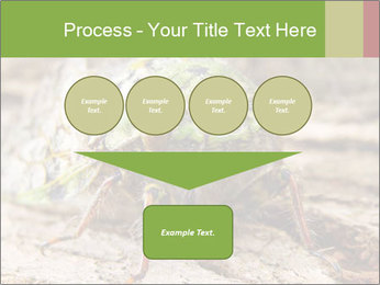 Green Cicada PowerPoint Template - Slide 93