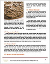 0000093348 Word Template - Page 4