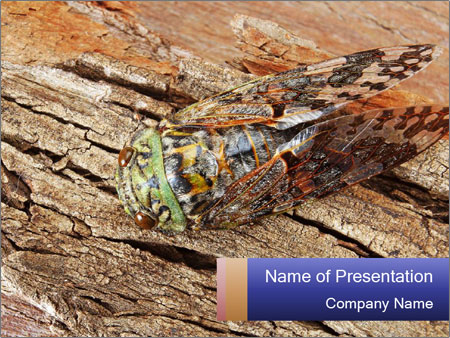 Green Cicada Camouflaged PowerPoint Template