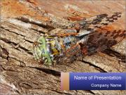 Green Cicada Camouflaged PowerPoint Templates