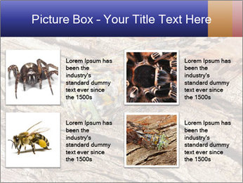 Green Cicada Camouflaged PowerPoint Template - Slide 14