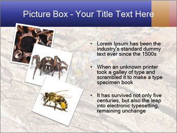 Green Cicada Camouflaged PowerPoint Template - Slide 17