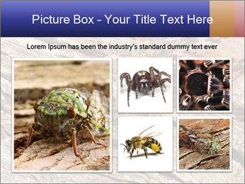 Green Cicada Camouflaged PowerPoint Template - Slide 19