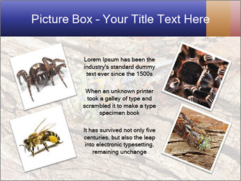 Green Cicada Camouflaged PowerPoint Template - Slide 24