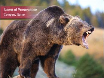 Brown Bear PowerPoint Templates - Slide 1